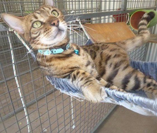 cat hammock 555×450@90%