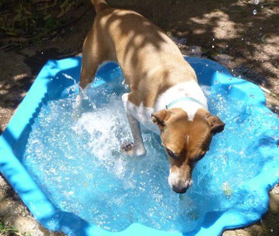 dog splash 555×450@90%