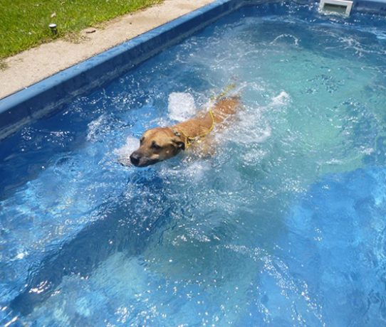 dog swimming 555×450@90%