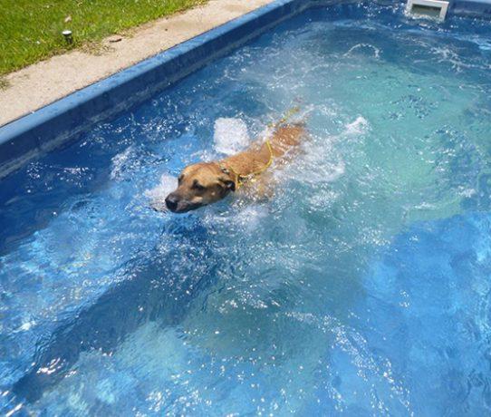 dog swimming 555×450@90%
